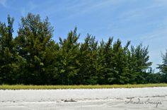 Nature photography  Captiva FL