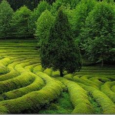 ecosystm – Tea Fields in Korea