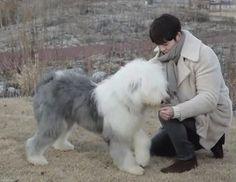 Kim Woo Bin and pororo ❤