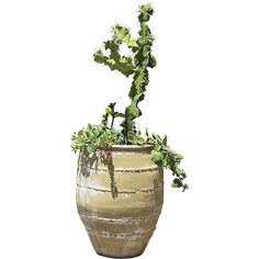 A cool green spiky plant in a tall clay pot that belongs in your Southwestern themed rendering.