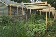 The same vegetable garden in June. The overhead supports are all in, the plants are growing well and there's a ton of vertical gardening going on to save space (more on all these support systems later)