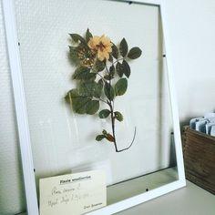 #test #ny tavla  #ingenbaksida #nordicdesign #herbarium #butterflyvintagedesign #butterflyvintage #trend  Ska jag göra fler såna här tavlor - vad tycker ni?