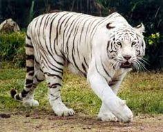 Resultado de imagen de animales salvajes