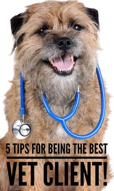 Are you and your pet on your best behavior at the vet's office? We have 5 rules that will make you the best vet client!