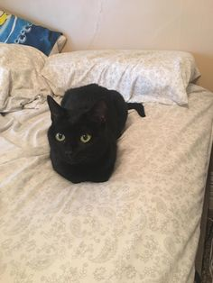 Thanks to everyone who gave me advice about taking the family cat to my new home. We brought her last night and this is her this morning catloafing on the bed! http://ift.tt/2qY5H4a