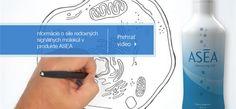 http://www.asea.net/Portals/10/EasyGalleryImages/39/345/sliders_2012_quickdraw_SLOVAKIA72287.png|ASEA Metabolites