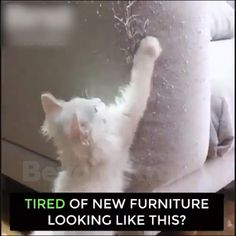 Crazy Cat Lady, Crazy Cats, Furniture Scratches, Cool Inventions, Cat Scratching, Pet Accessories, Training Tips, Dog Training, Cool Things To Buy
