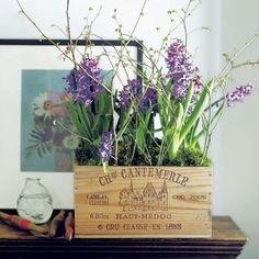 How to grow indoor bulbs in time for Christmas