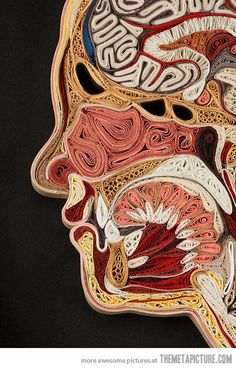 funny paper art - human anatomy