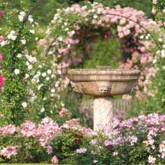 Les Journées de la #rose 2013, les 7, 8 et 9 juin à l'abbaye de Chaalis #PiagetRose