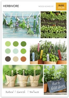 For those who want to dip their feet, ever so gently, into the gardening pastime, a herb garden would be the best place to start. It is eas. Thyme Herb, Herb Garden, The Good Place, Dip, Planter Pots, Lavender, Faces, Herbs, Gardening