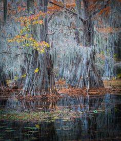 Caddo Lake, Autumn