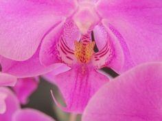 pro orchideje | Nemoci+léčení Flora, Rose, Plants, Gardening, Tips, Vanda Orchids, Pink, Lawn And Garden, Plant