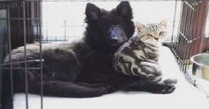 16 Cats And Dogs That Absolutely Love Each Other
