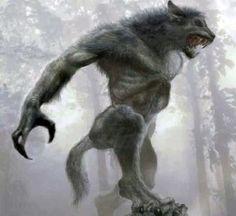 Werewolf Vs Vampire, Werewolf Art, Fantasy Creatures, Mythical Creatures, Dark Fantasy, Fantasy Art, Fantasy Beasts, Vampires And Werewolves, World Of Darkness