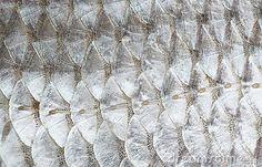Roach Fish Skin