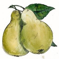 bing images of pears | PEARABLES / images of pears in art - Bing Images