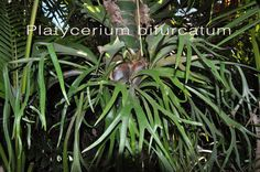Fern Factory - Fern Factory offers a wide variety of ferns and tropical plants