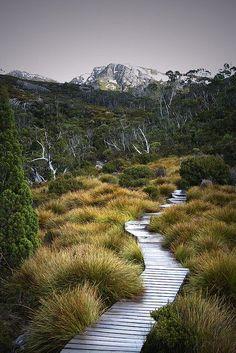 Path to Wombat Pool, Cradle mountain, Tasmania, AUS