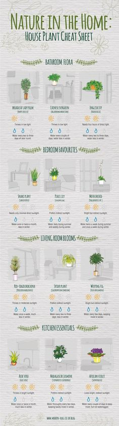 This will help you nurture your houseplants. Rather than going to your neighborhood nursery and choosing a plant for your kitchen discretionarily, utilize the rules in this sheet to figure out which variety is best for the different rooms in your house. When you get your new plant home, follow the care advice to determine Read More...