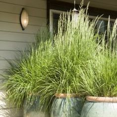 grasses make a great divider in large planters for exterior entrance