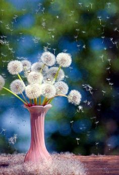 Time to make a wish and send it to the universe....xxx dandelions