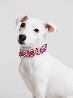 Beautiful photography from FreePeople #friendshipcollar