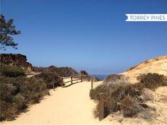 HELLO, SAN DIEGO + Torrey Pines hiking trails
