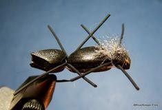 Chernobyl Ant | www.johnkreft.com