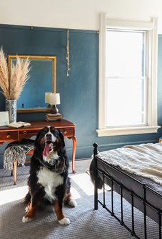 DIY DUPLEX | PetProof Carpet Questions Answered