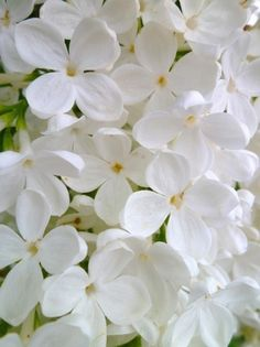 Beautiful white flowers add a breathtaking glow to the home! #decor #flowers