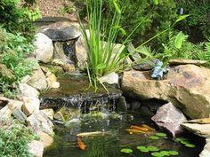 how to create water garden oasis backyard