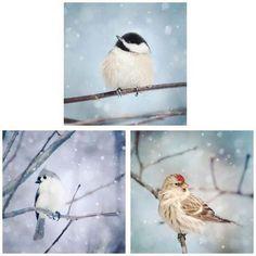 "Set of 3 Prints, Winter Wall Art Set ""Birds in Snow"""