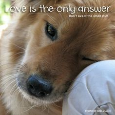 #Love is the only answer. #Quote