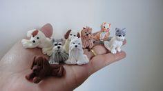 Mini mini cachorrinhos e gatinhos
