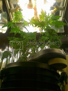 Click this image to show the full-size version. Grow Lights For Plants, Diy Greenhouse, Fun At Work, Aquaponics, Outdoor Fun, Plant Leaves, Bulb, Image, Planting