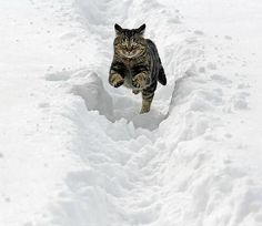 leaping cats in the snow? What's next? Leaping aardvarks?
