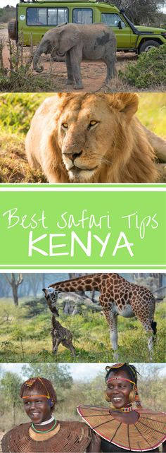 Best Safari Tips for Kenya