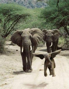 Little one looks like he is skipping or getting ready to take off........ maybe they found Dumbo
