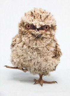 mr fuzzy!!!whooooooooo???