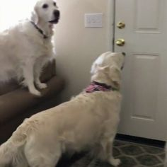 Dog comes over for a play date http://ift.tt/2fRW8yD