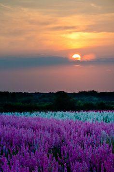 Confetti Fields - Sunset by Mark Barrett