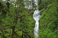 Photo of Munson Creek Falls