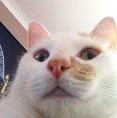 25 Gatos engraçados que adoram fazer selfie   ROCK'N TECH - Pág. 2