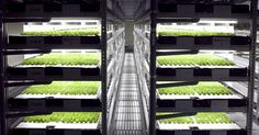 This farmerless farm will also be soilless and sunless, instead relying on robotics, LEDs, and hydroponics to grow lettuce in Kyoto, Japan.