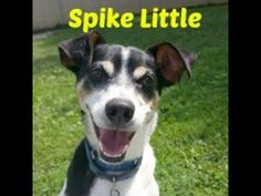 Spike Little