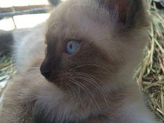 My cute cat!!my cat name:kitty!!!!!!❤️❤️❤️❤️