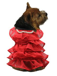 Broads with Brains: It's Fashion Friday!: Is That Dog Wearing A Dress?