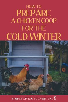 Most chickens can handle the coldest of temperatures but that doesn't mean you shouldn't take steps to prepare their coop for winter. Here are some super simple tips that will cost little to no money. Raising Backyard Chickens, Keeping Chickens, Meat Chickens, Building A Chicken Coop, Diy Chicken Coop, Farm Gardens, Outdoor Gardens, Chickens In The Winter, Chicken Breeds