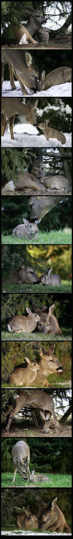 Un ciervo y una liebre hermosos. Como mejores amigos.